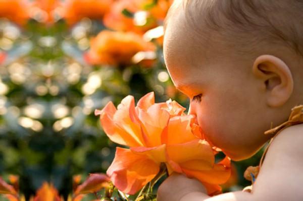 Aromaterapia para mães e filhos