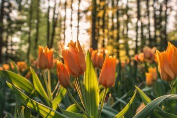 Terapia com Florais: como funciona