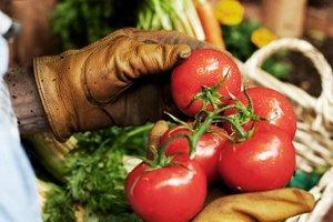 Orgânicos podem melhorar a saúde