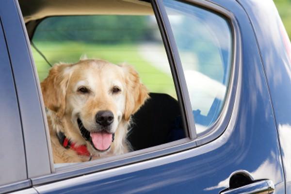 Animais de estimação na estrada