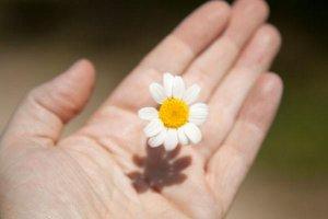 O que você está plantando em sua vida?