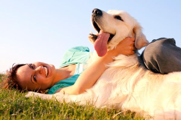 Animais de estimação deixam rotina divertida