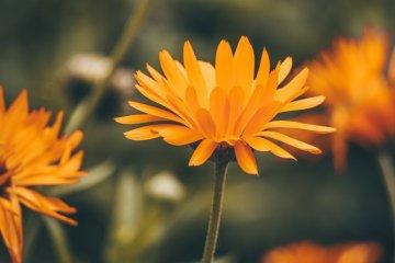 Significado da cor laranja: cor da prosperidade