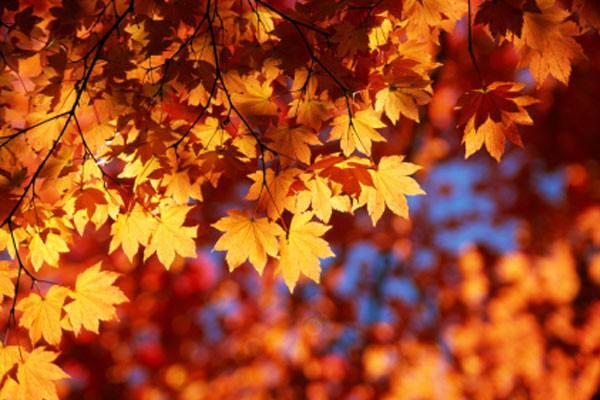 Outono: tempo de perdas e ganhos