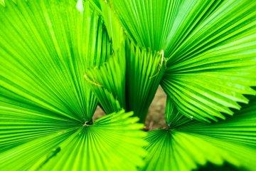 Sinificado da cor verde: cor do equilíbrio e do bem-estar
