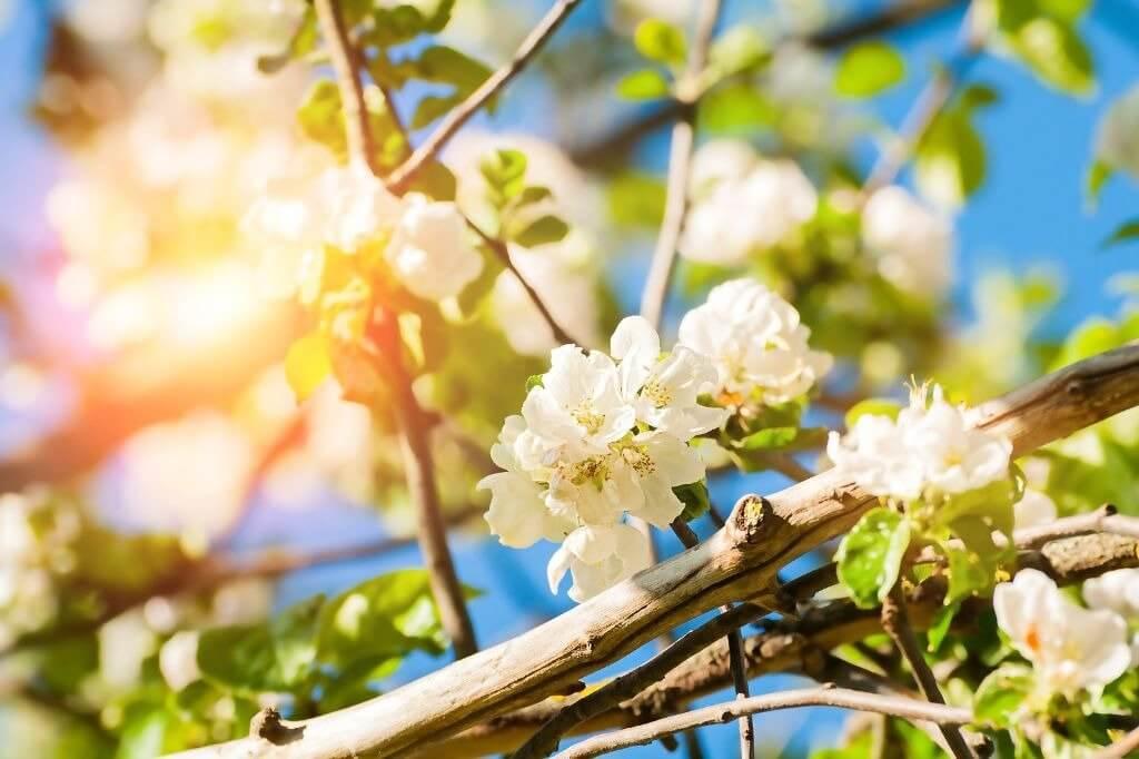 Primavera simboliza ciclo de prosperidade