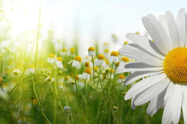 Primavera, um convite ao florescer