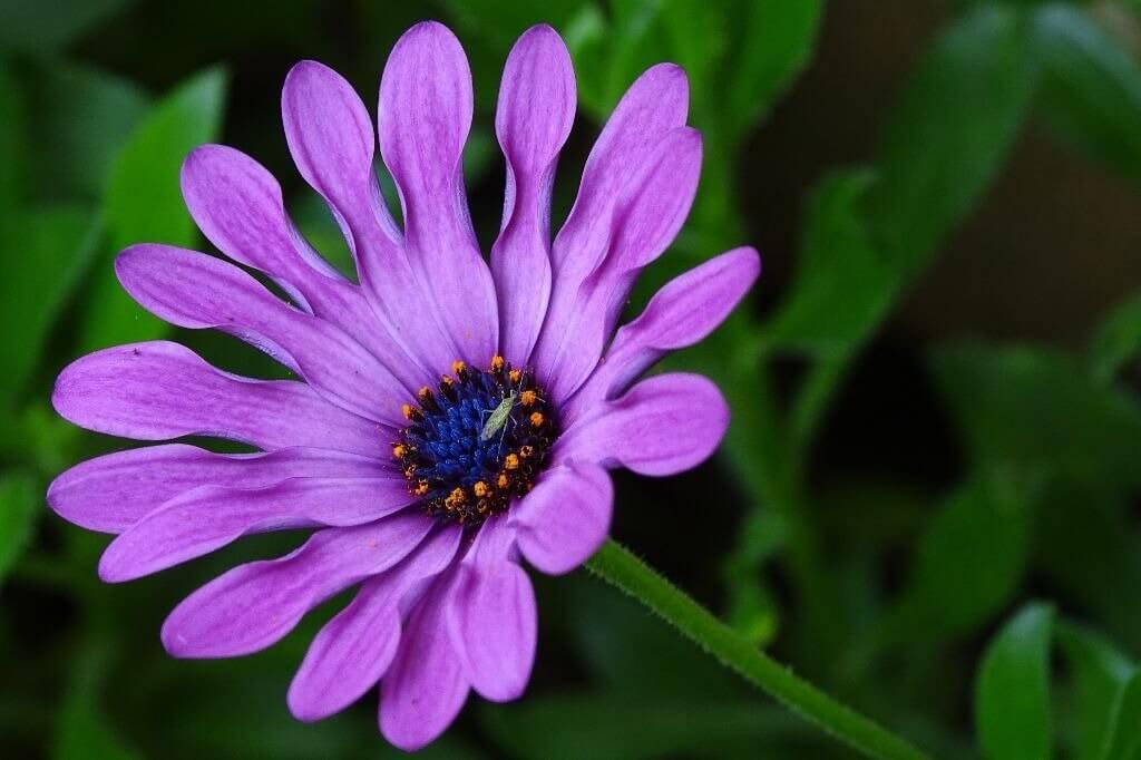 Significado da cor violeta: cor do equilíbrio e da espiritualidade