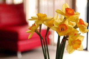 Arranjos de flores e Feng Shui