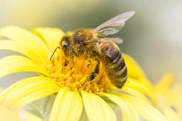O que significa sonhar com abelha?