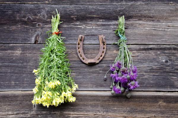 Florais para despertar vontade de agir e ter prosperidade