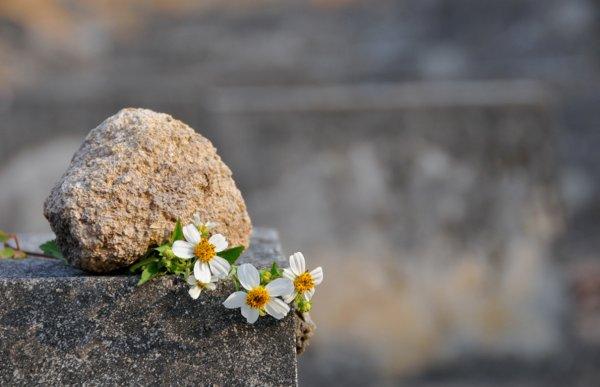 Dia dos Mortos e suas diferentes celebrações