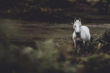 Sonhar com cavalo: o que significa?