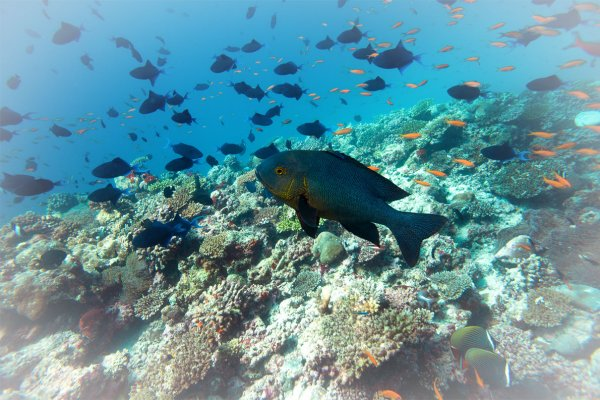 O que significa sonhar com peixe?