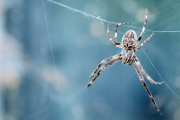 Sonhar com aranha: o que significa ?