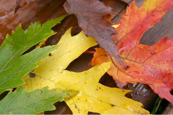 Tendências de cores para o outono