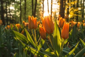 Equinócio de Primavera: hora de se despedir das dificuldades
