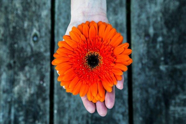 Laranja: a cor de 2018 traz coragem e harmonia nos relacionamentos