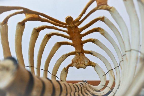 O que significa sonhar com ossos?