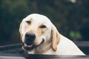 Homeopatia para animais: entenda benefícios