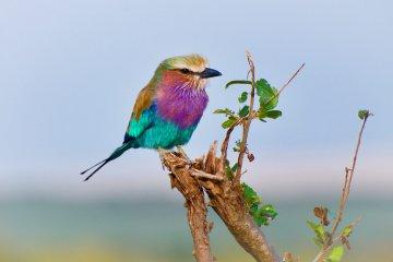 O que significa sonhar com pássaro?