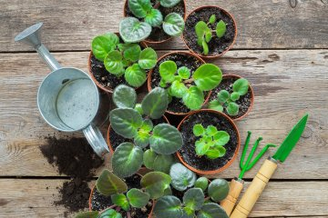 Horta em casa: como fazer?