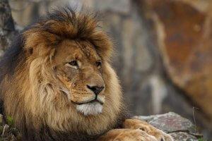 Signo do mês: Leão
