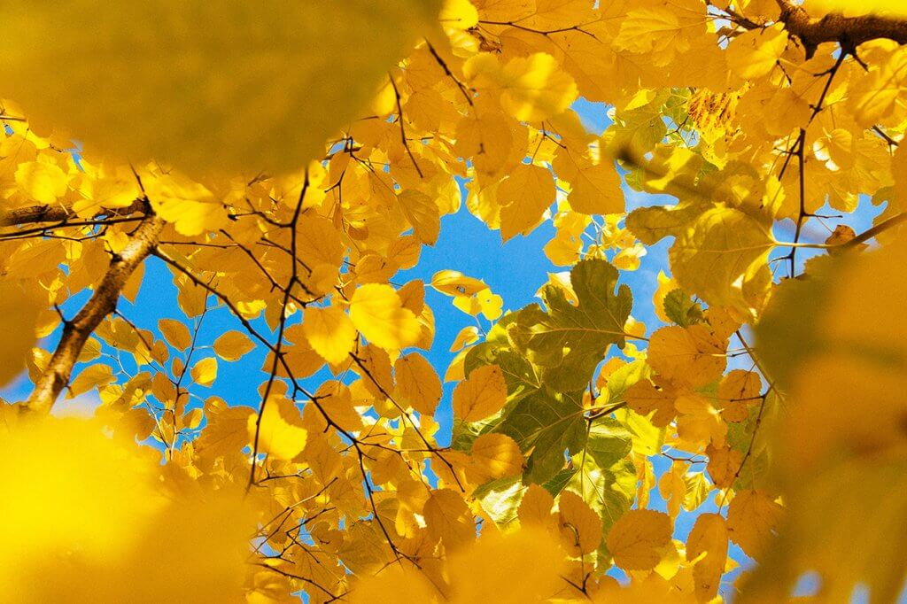 Amarelo: cor de 2019 potencializa comunicação, criatividade e novos talentos