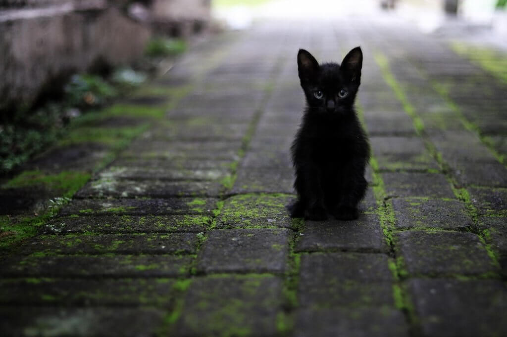 Gatos pretos e a crença de má sorte