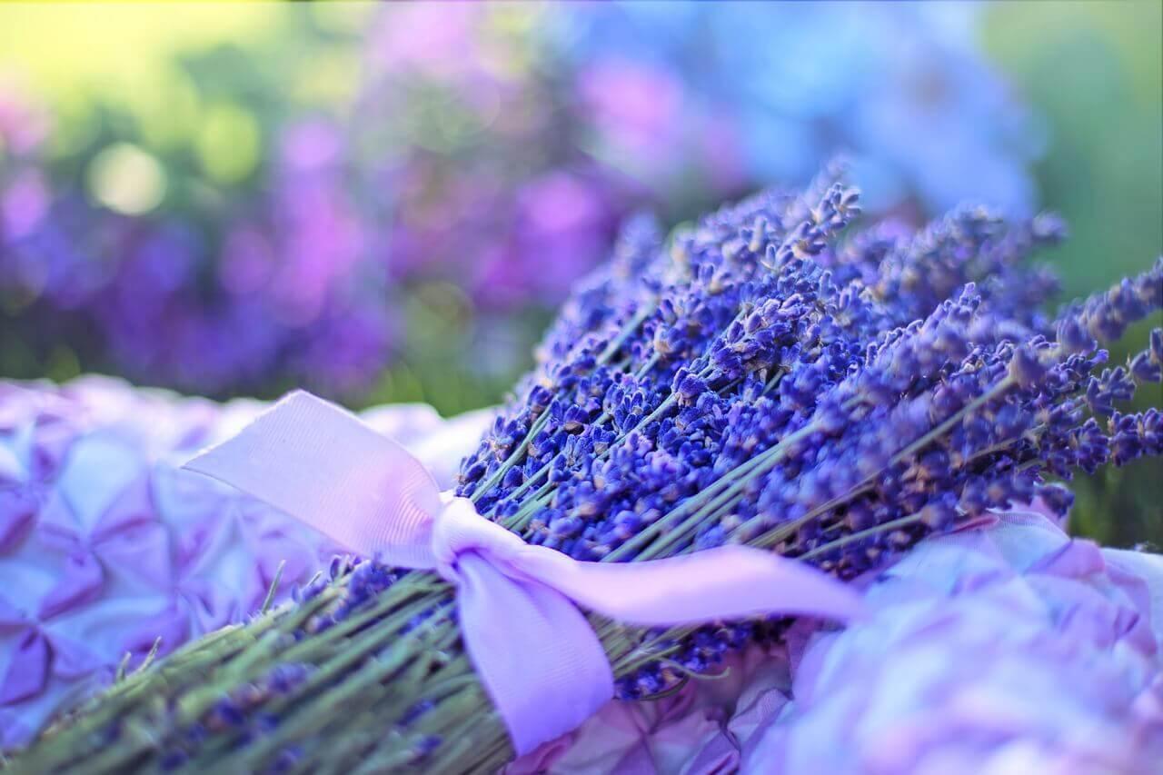 Curso: Aromaterapia – Primeiros Passos