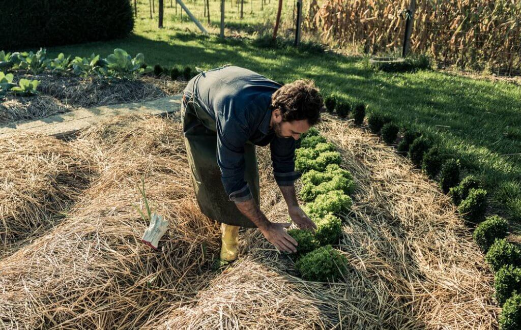 Hábitos de vida saudável por meio da permacultura