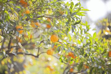 Aromaterapia e Primavera: é hora de viver coisas novas