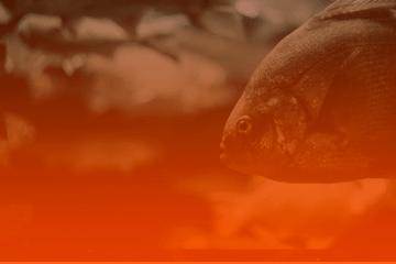 Previsões para Peixes em 2020