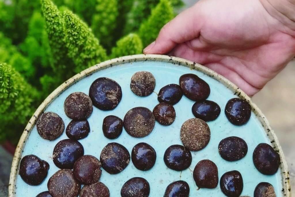 Bala ayurvédica aumenta a imunidade e sacia a vontade de comer doce