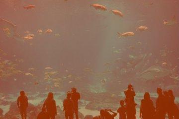 Previsões para Aquário em 2021