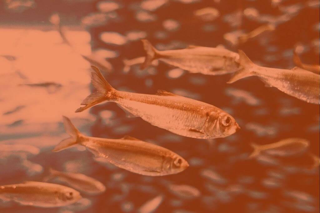 Previsões para Peixes em 2021