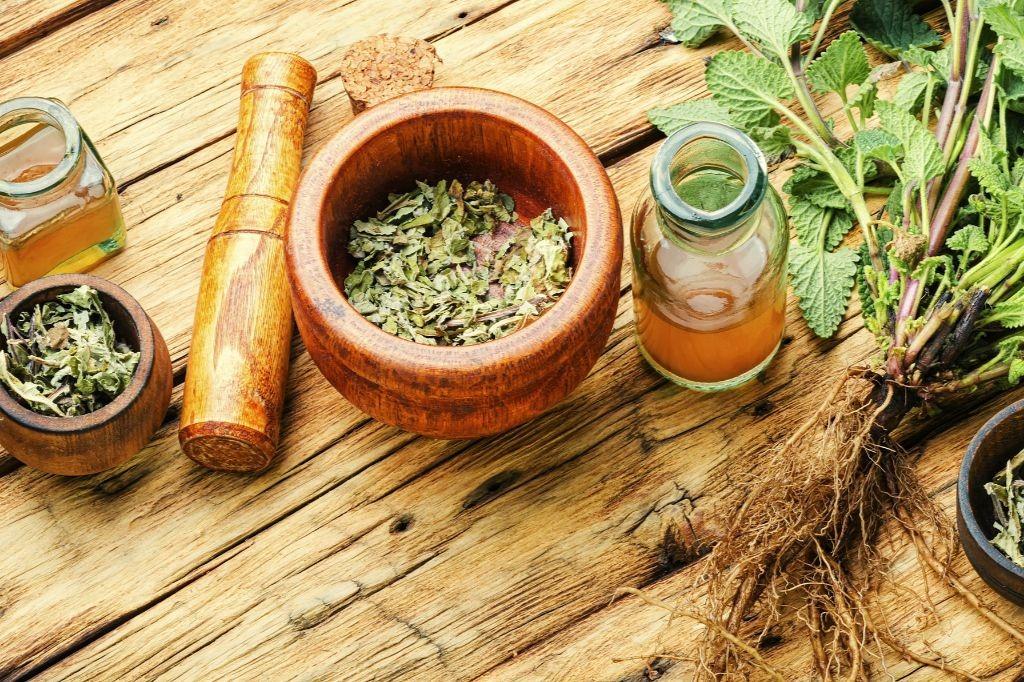 Plantas Medicinais: guia de como usar