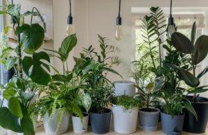 plantas para dentro de casas feng shui