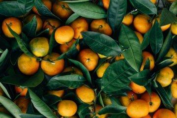 Óleo essencial de Bergamota: para que serve e propriedades