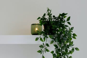 Feng Shui: guia das plantas para dentro de casa