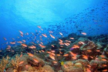 Sonhar com peixe: o que significa?