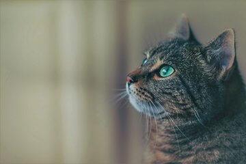 Sonhar com gato: o que significa?