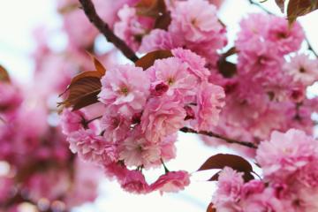 Dicas para lidar com as alergias na Primavera